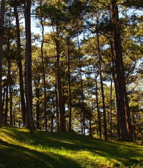 Trees have historically been a proven source of income in the Philippines.
