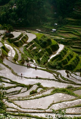 The country has a strong tradition of rice cultivation.