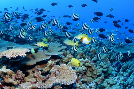 Coral reefs were once a vast natural resource in the Philippines.