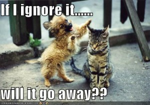 funny-pictures-cat-ignores-dog