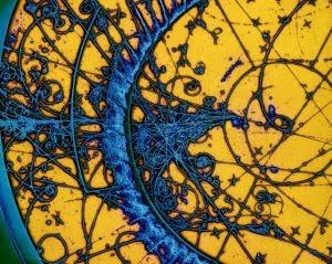 subatomic_particle_tracks