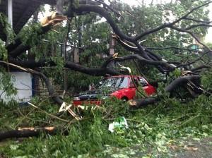 tree crashes on car typhoon glenda