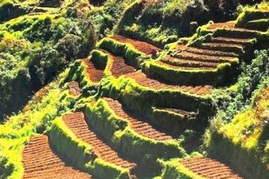 benguet pine forest turned into vegetable farms