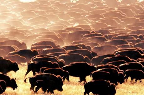 herd_mentality