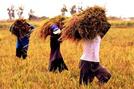 philippines_sugar_plantation